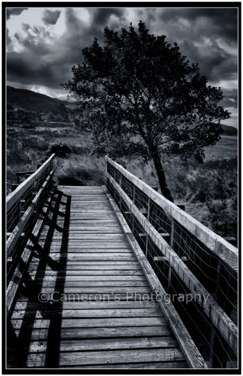 Bridge And Tree Galtair Glenelg